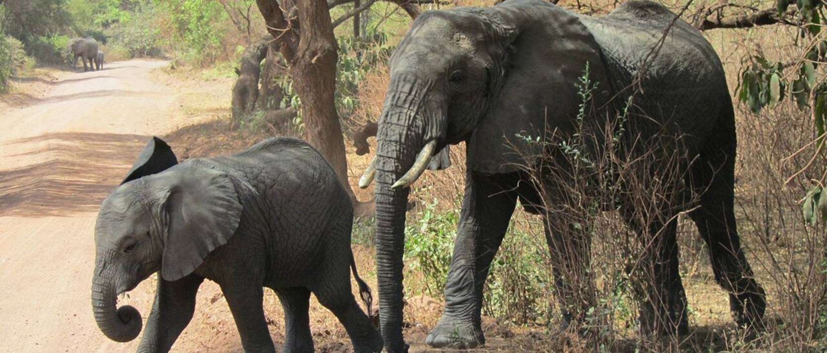 baby and mother elephant walking